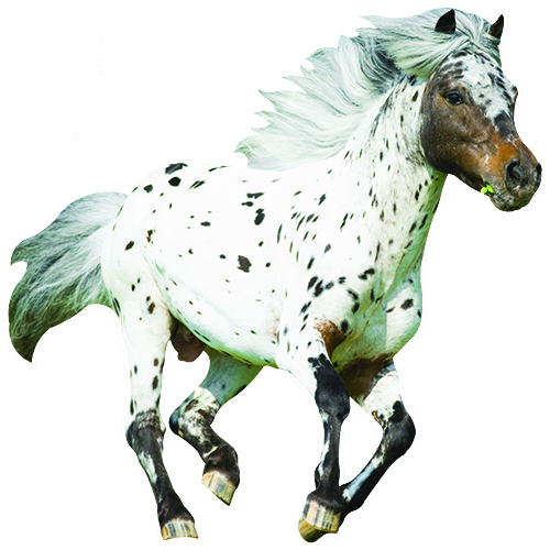 View Product Appaloosa Horse Wall Decal
