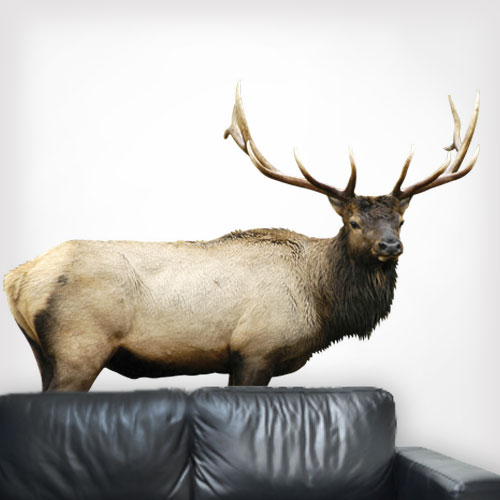 View Product Elk Wall Decal