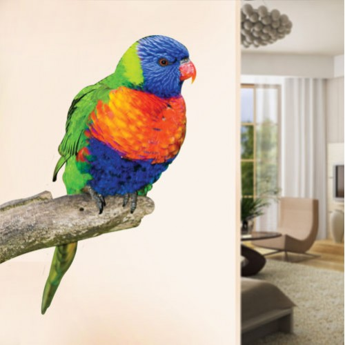 Rainbow Lorikeet Wall Decal
