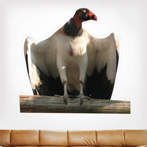 King Vulture Wall Decal